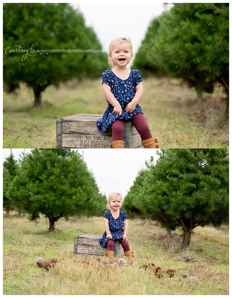 christmas tree farm elgin sc
