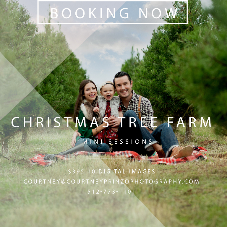 christmas tree farm mini sessions