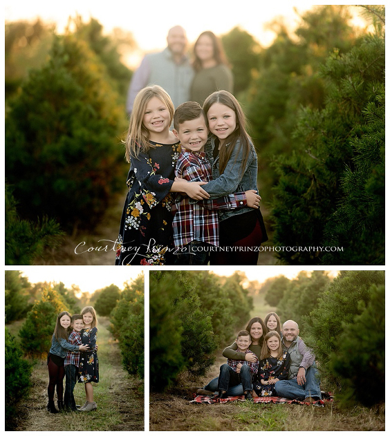 Christmas Tree Farm Mini Sessions.Christmas Mini S Archives Family Photography Senior